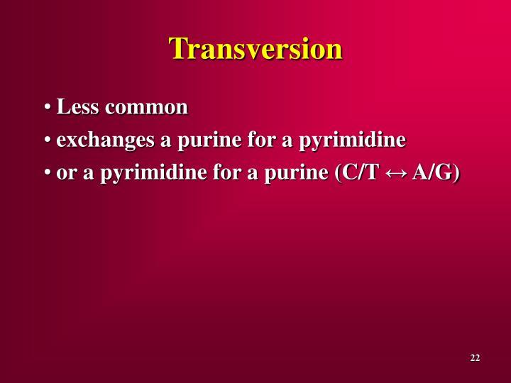 Transversion