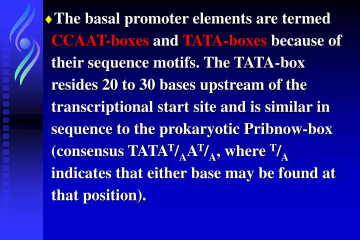 The basal promoter elements are termed