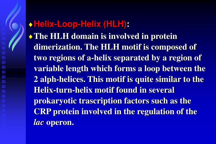 Helix-Loop-Helix (HLH)