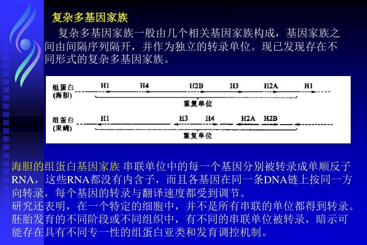 复杂多基因家族