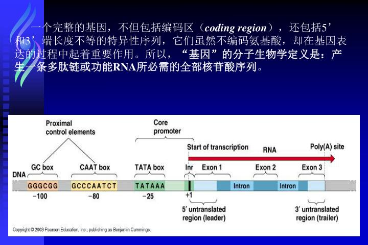 一个完整的基因,不但包括编码区(