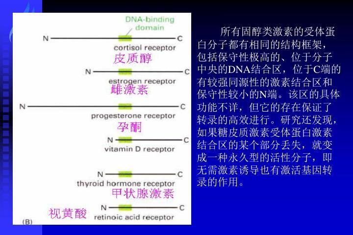 所有固醇类激素的受体蛋白分子都有相同的结构框架,包括保守性极高的