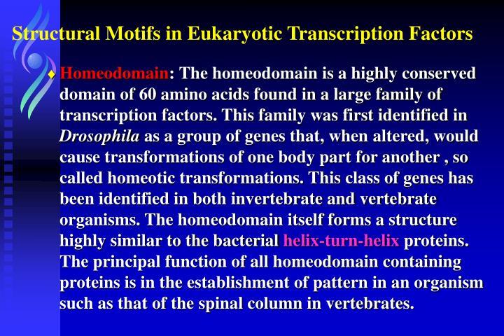 Structural Motifs in Eukaryotic Transcription Factors