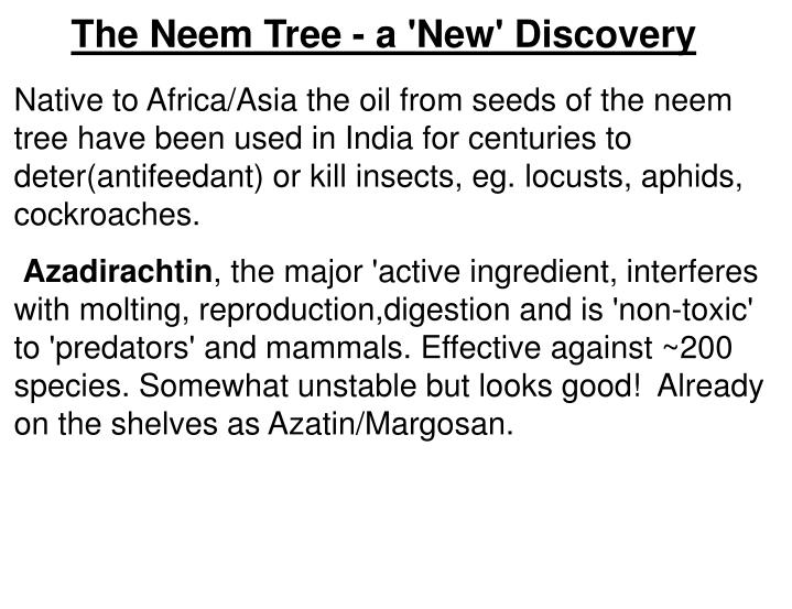The Neem Tree - a 'New' Discovery