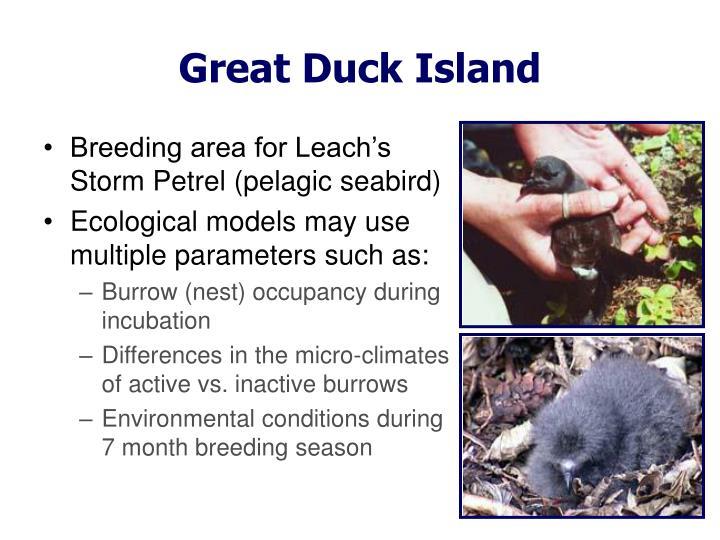 Great Duck Island