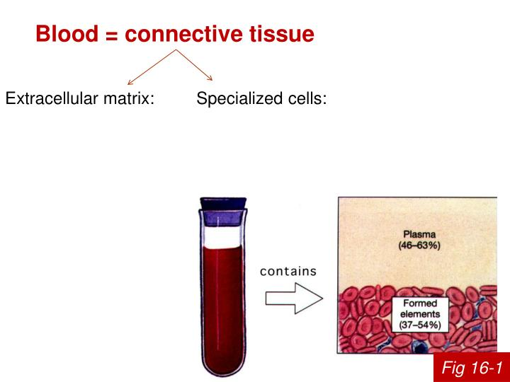 Blood = connective tissue