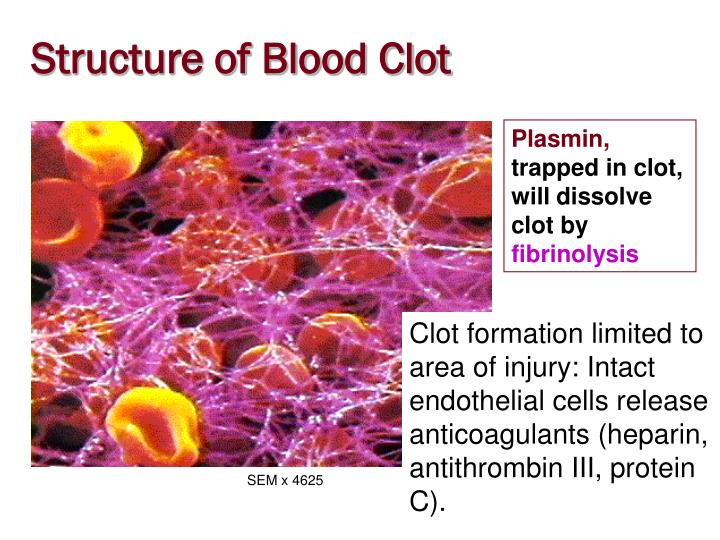 Structure of Blood Clot