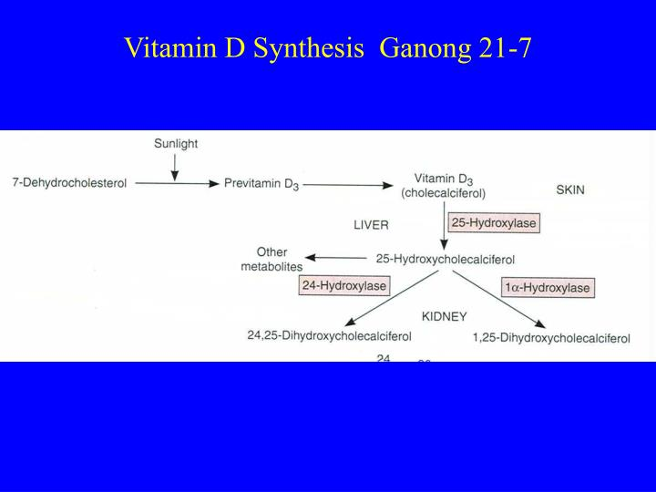 Vitamin D Synthesis  Ganong 21-7