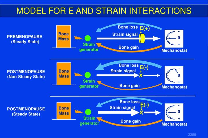 MODEL FOR E AND STRAIN INTERACTIONS
