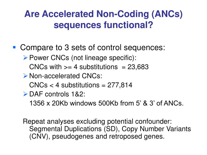 Are Accelerated Non-Coding (ANCs) sequences functional?