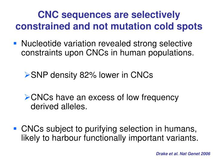CNC sequences are selectively constrained and not mutation cold spots