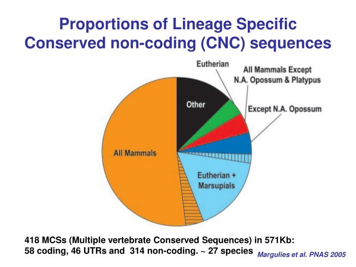Proportions of Lineage Specific Conserved non-coding (CNC) sequences