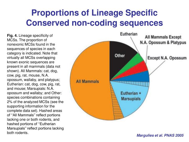 Proportions of Lineage Specific Conserved non-coding sequences