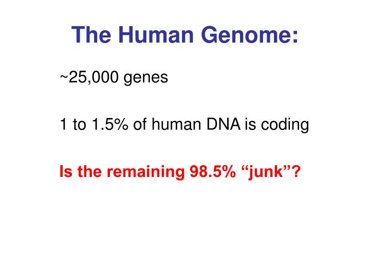 The human genome
