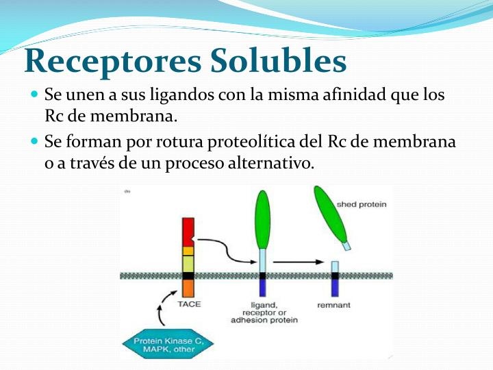 Receptores Solubles