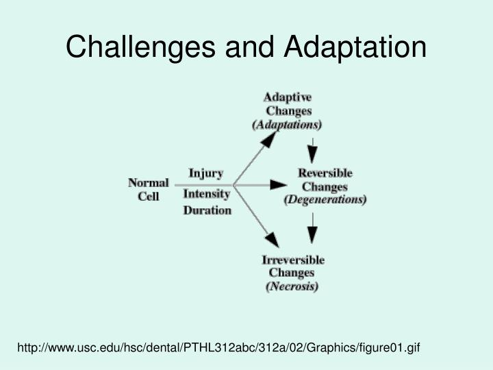 Challenges and Adaptation