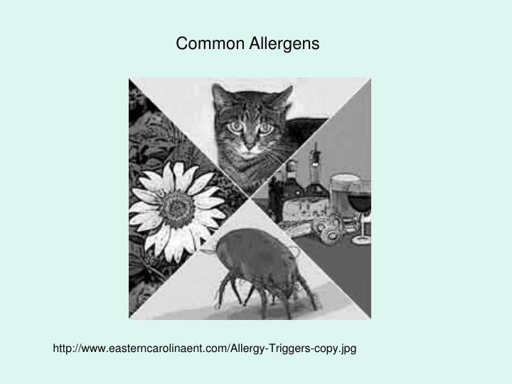 http://www.easterncarolinaent.com/Allergy-Triggers-copy.jpg