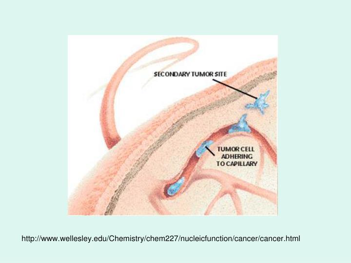 http://www.wellesley.edu/Chemistry/chem227/nucleicfunction/cancer/cancer.html