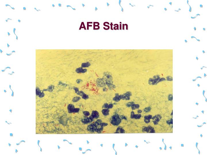 AFB Stain