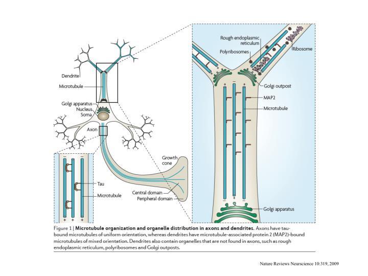 Nature Reviews Neurscience 10:319, 2009