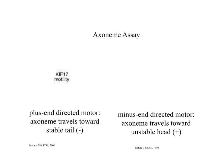 Axoneme Assay