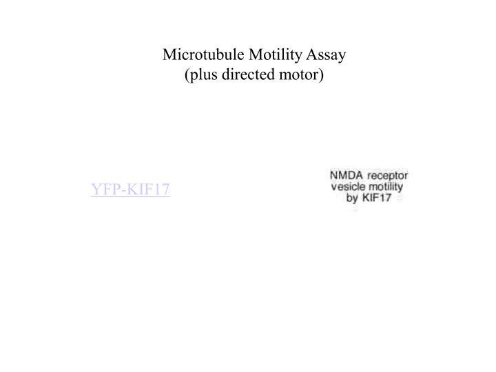 Microtubule Motility Assay