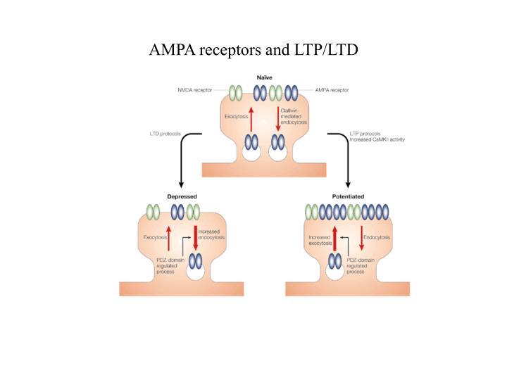 AMPA receptors and LTP/LTD