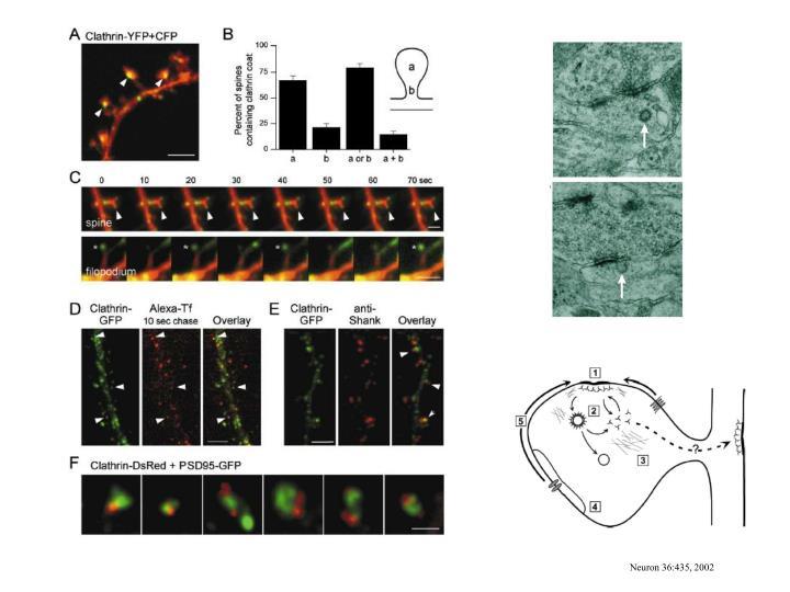 Neuron 36:435, 2002