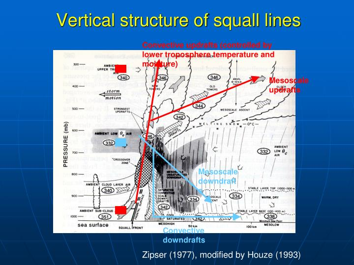 Vertical structure of squall lines