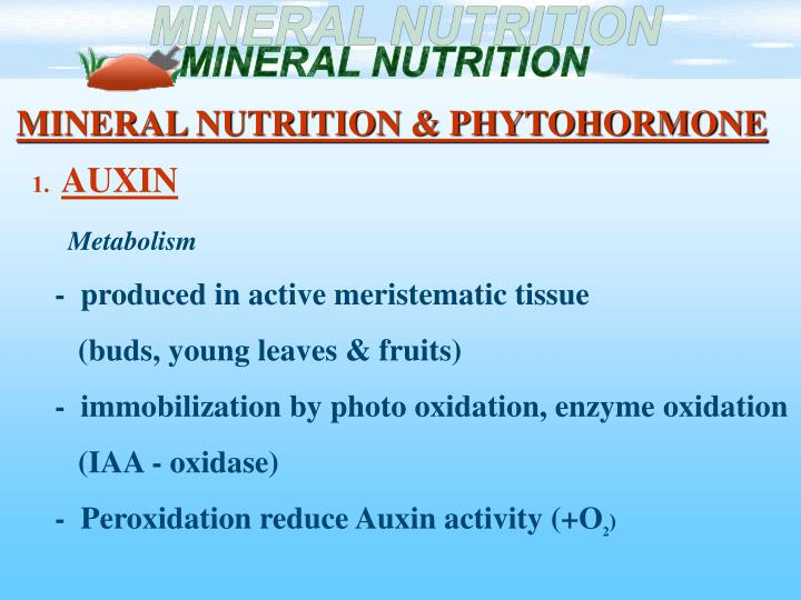 MINERAL NUTRITION