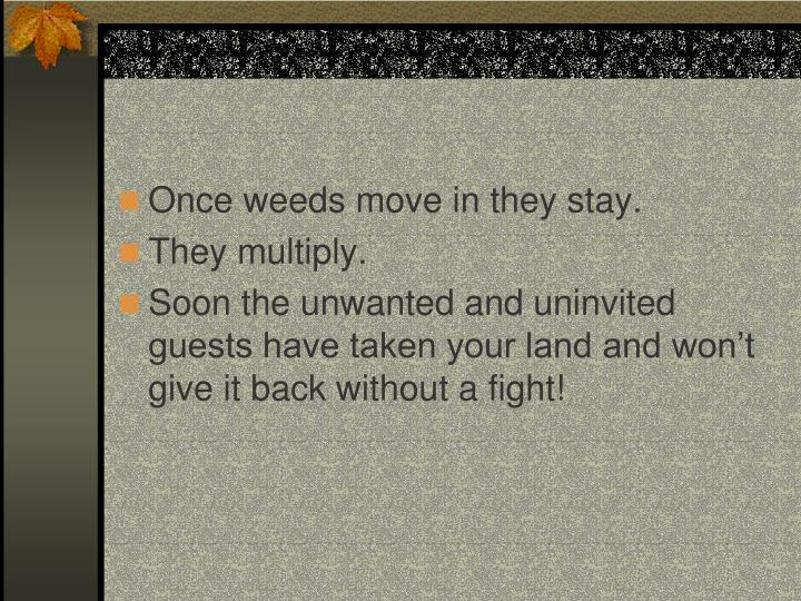 Once weeds move in they stay.