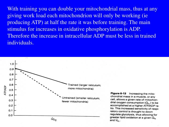 With training you can double your mitochondrial mass, thus at any giving work load each mitochondrion will only be working (ie producing ATP) at half the rate it was before training. The main stimulus for increases in oxidative phosphorylation is ADP. Therefore the increase in intracellular ADP must be less in trained individuals.