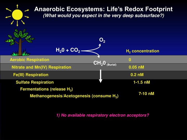 Anaerobic Ecosystems: Life's Redox Footprint