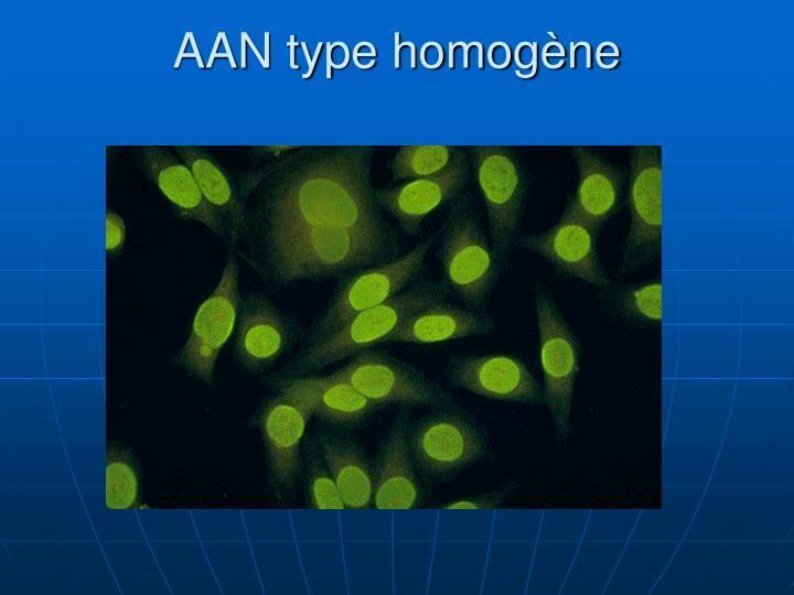 AAN type homogène