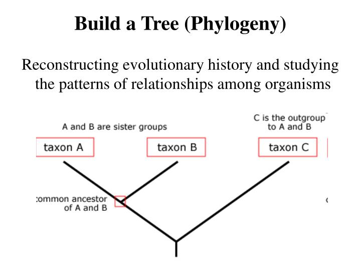 Build a Tree (Phylogeny)