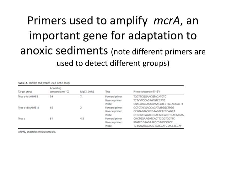 Primers used to amplify
