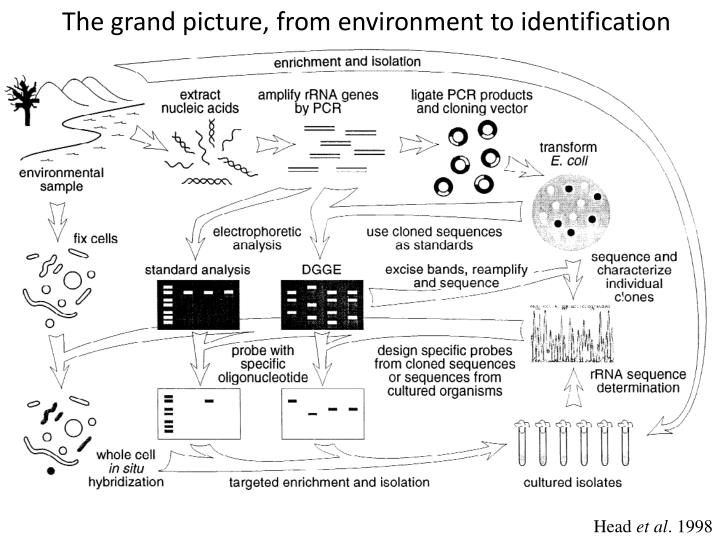 The grand picture, from environment to identification