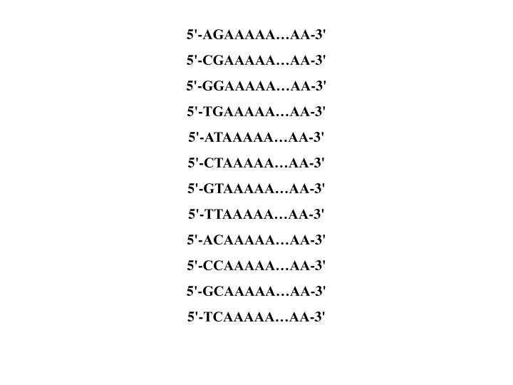 5'-AGAAAAA…AA-3'