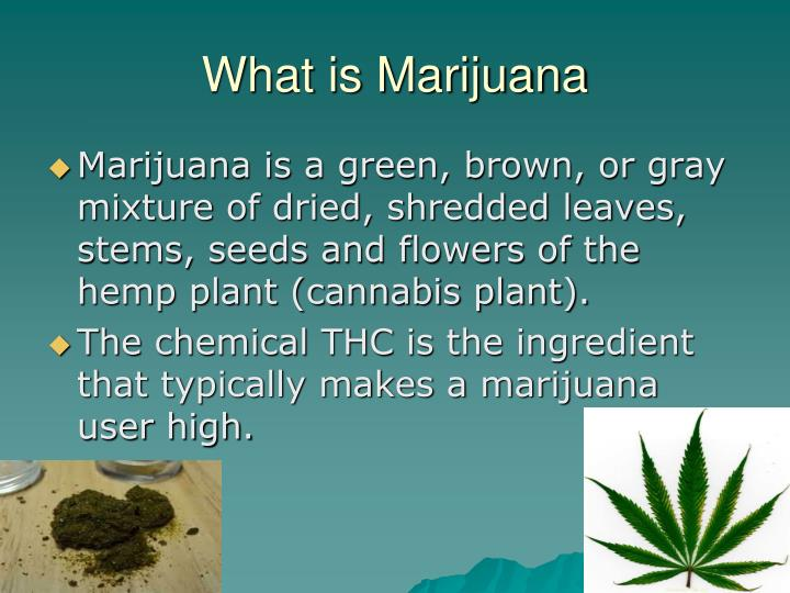 What is marijuana