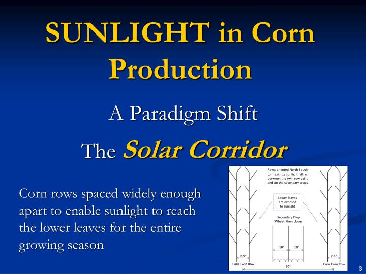 Sunlight in corn production