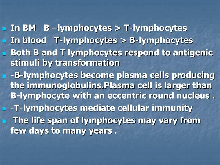 In BM   B –lymphocytes > T-lymphocytes