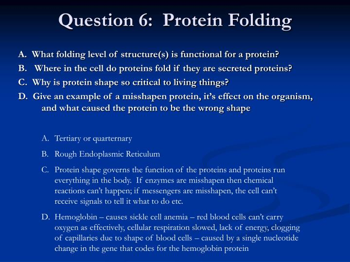 Question 6:  Protein Folding