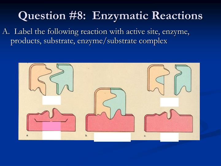 A.  Label the following reaction with active site, enzyme, products, substrate, enzyme/substrate complex