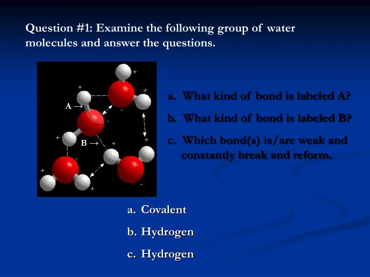 Question #1: Examine the following group of water molecules and answer the questions.