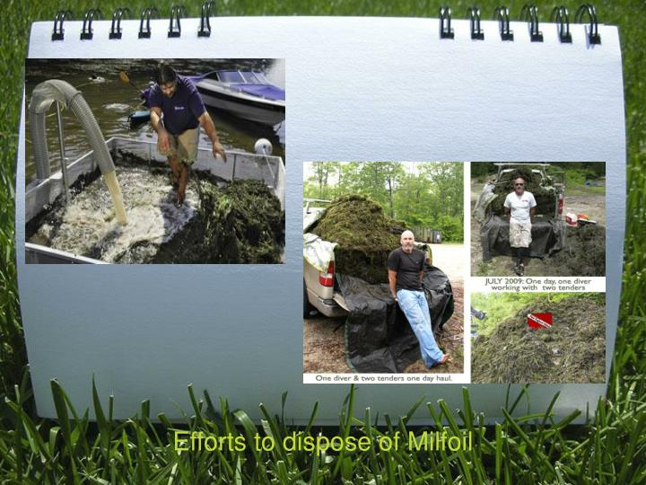Efforts to dispose of Milfoil