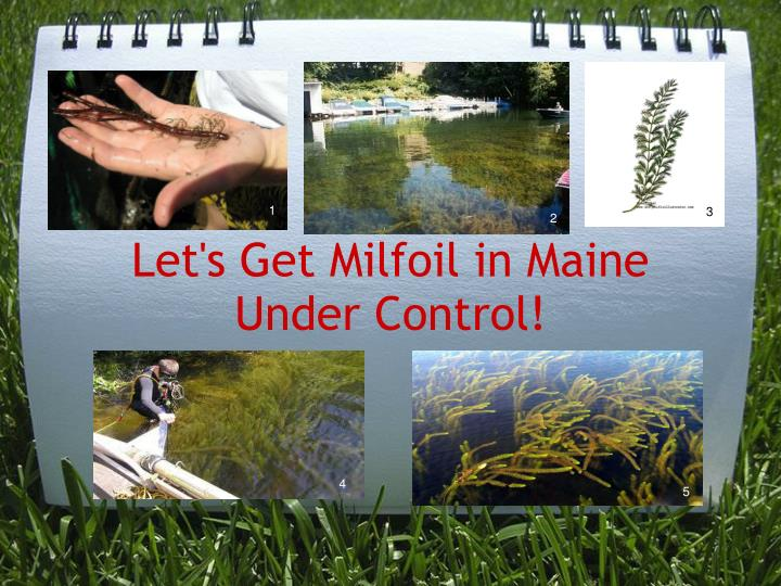 Let's Get Milfoil in Maine Under Control!