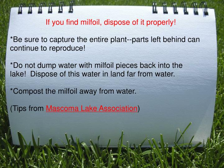 If you find milfoil, dispose of it properly!