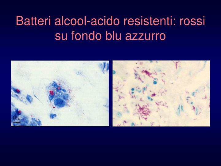 Batteri alcool-acido resistenti: rossi su fondo blu azzurro