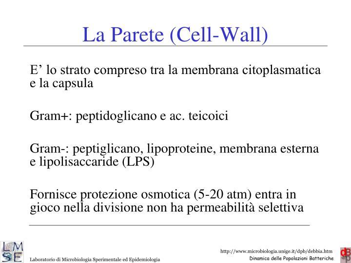 La Parete (Cell-Wall)