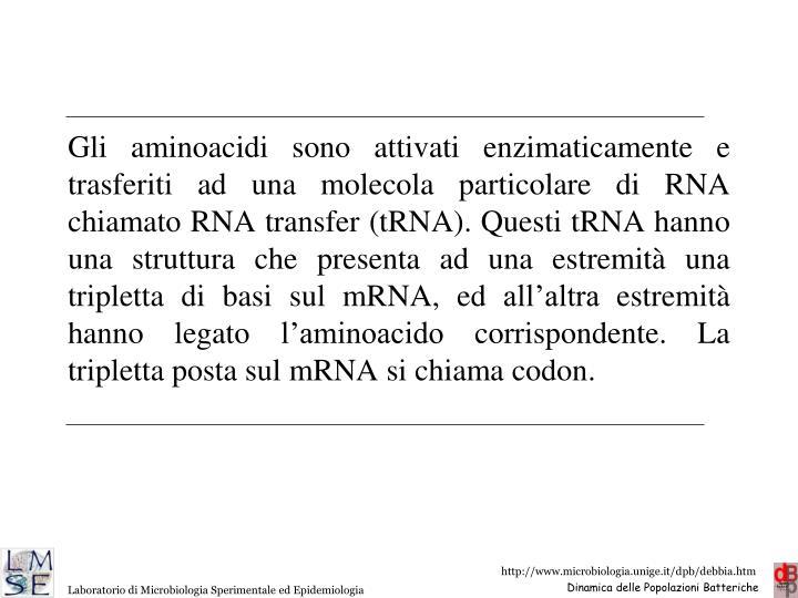 Gli aminoacidi sono attivati enzimaticamente e trasferiti ad una molecola particolare di RNA chiamato RNA transfer (tRNA). Questi tRNA hanno una struttura che presenta ad una estremità una tripletta di basi sul mRNA, ed all'altra estremità hanno legato l'aminoacido corrispondente. La tripletta posta sul mRNA si chiama codon.